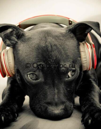 Скачать бесплатно музыку из интернета. Секретные способы.