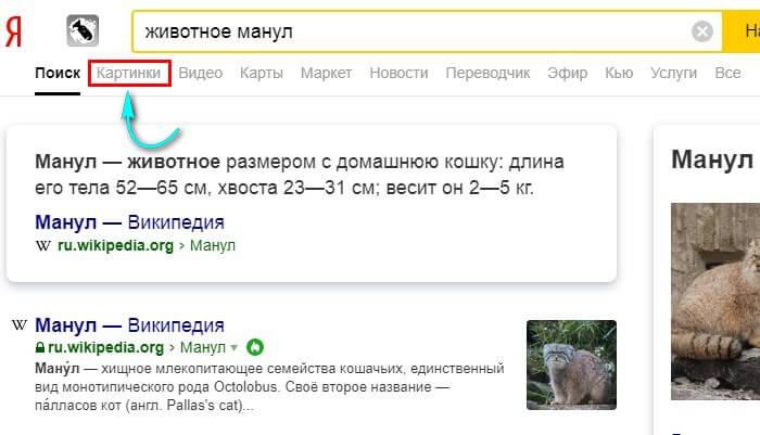 Как скачать картинку с Яндекса на компьютер